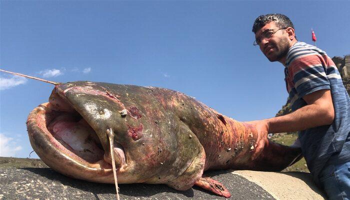 Kars'ta dev yayın balığı yakalandı