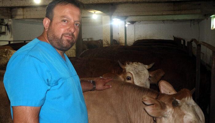 Kurbanlık hayvanlarda 'ölümcül kene' uyarısı