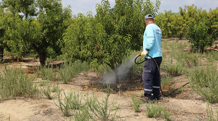 """Tarım Bakanı'ndan açıklama: """"Akdeniz sineği zarar vermemiş"""""""