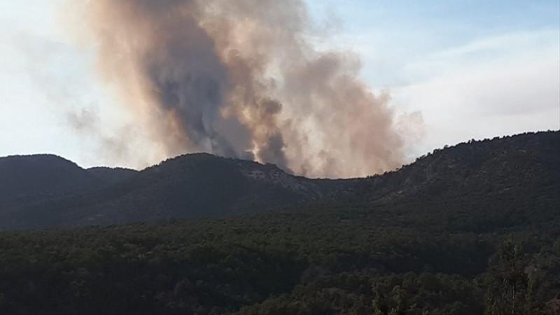 Ankara'daki orman yangını kontrol altında