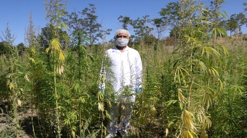 Ata tohumlarıyla organik üretim yapıyor