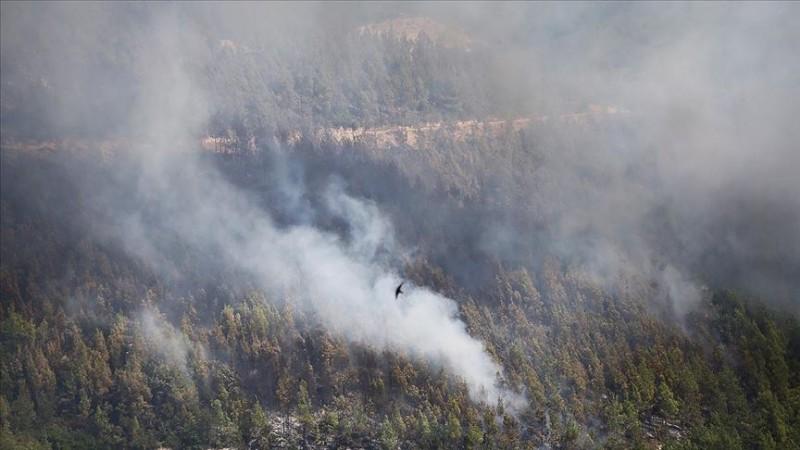 Orman yangınlarının yüzde 84'ü ihmalden çıktı