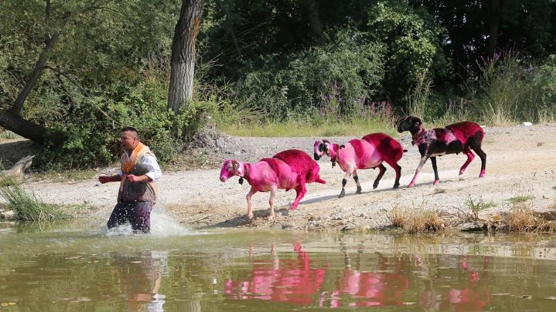 Sudan Koyun Geçirme Yarışması bu yıl temsili