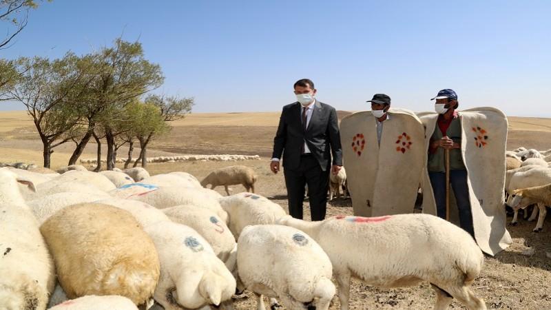 """""""Bir 'Sürü' Neden Projesi""""nde çiftçilere koyun dağıtıldı"""