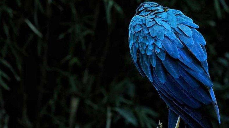 Mavi ve Yeşilin Neden Doğadaki En Parlak Renkler Olduğu Açıklandı