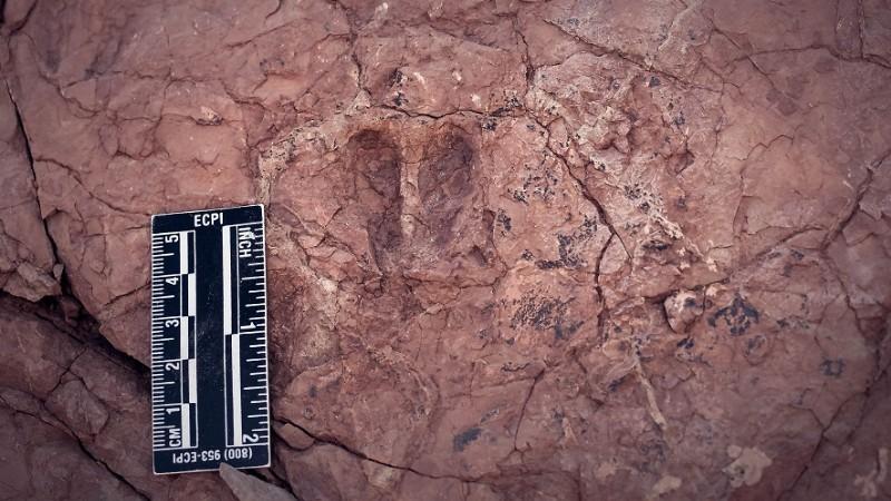 Sivas'ta hayvan ayak izi fosilleri bulundu