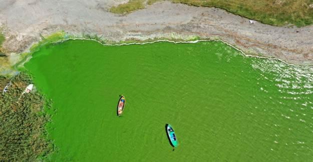 Ulubat Gölü Yeşile Büründü